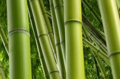 bamboom bamboe
